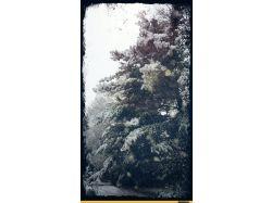 красивые фотографии зима