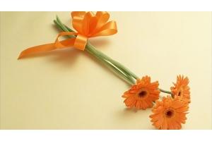 Цветы картинки герберы