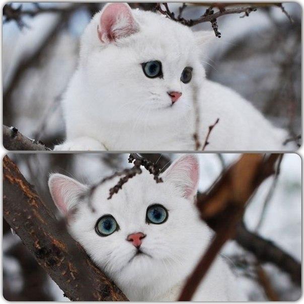 Красивые и мультяшные картинки полосатых кошек » Скачать ...