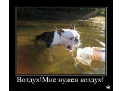 Прикольные картинки  с животными бесплатно
