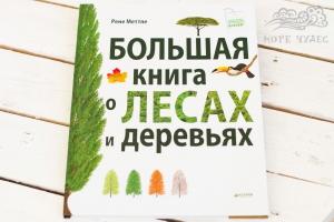 Части дерева картинки для детей
