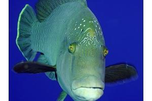 Рыба картинки