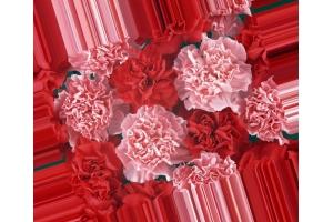 Картинки цветы гвоздики