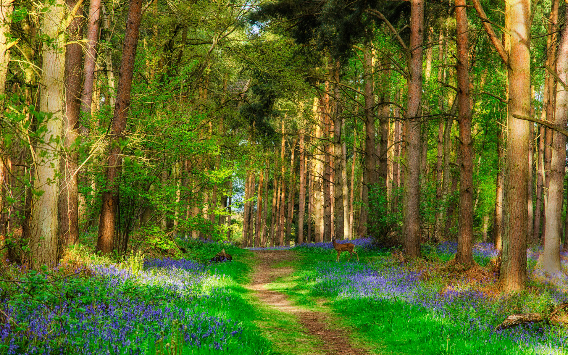 Красивая открытка леса