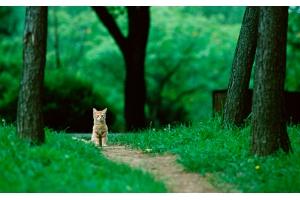 Красивые картинки на рабочий стол природа,лес