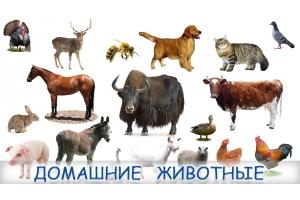 Фантастические животные картинки для детей