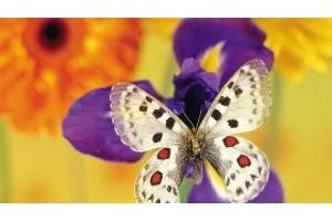 Обои на рабочий бабочки