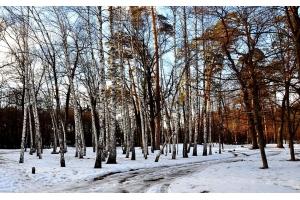 Скачать бесплатно картинки зима