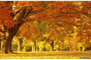 Золотая осень картинки фото