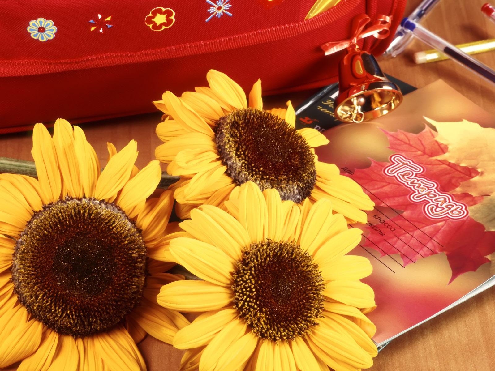 Открытки, открытки цветы учителю