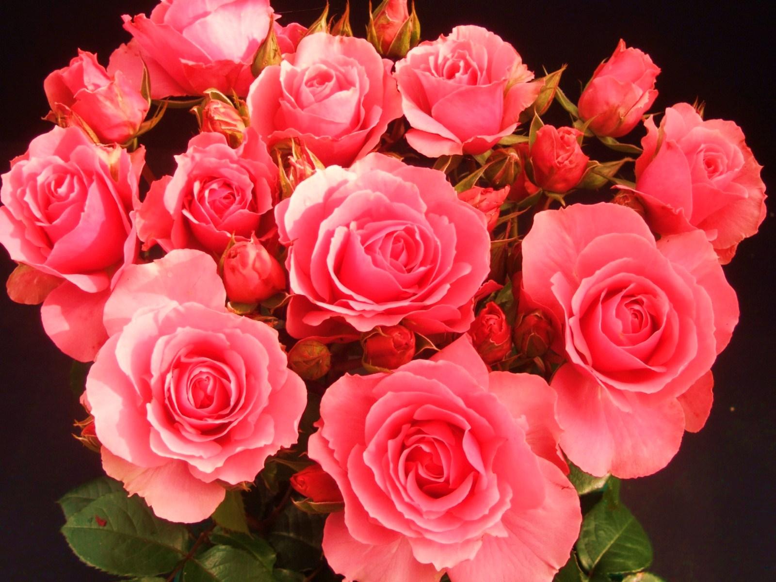 Тюльпаны букеты, просто цветы картинки