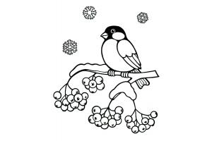 Снегири картинки для детей раскраски