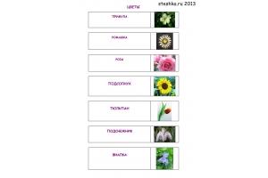 Цветы картинки с названиями