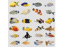 Подводный мир - рыбы
