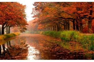 Дождливая осень фото