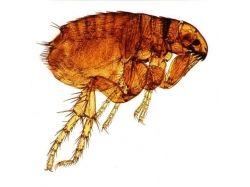 Мелкие домашние насекомые фото