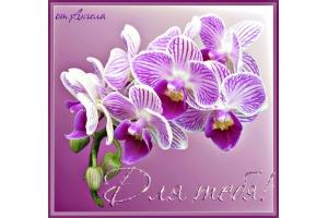 Красивые картинки с надписем имени расул