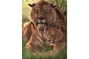 Саблезубые тигры фото