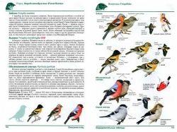 Птицы москвы и подмосковья фото