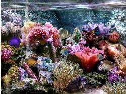 Обои подводный мир 240*320