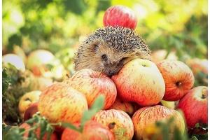 Обои на рабочий яблоки