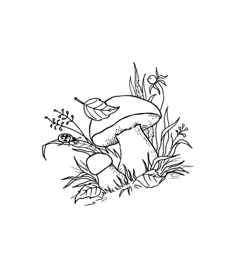 раскраска на тему лес грибы ягоды всегда переднем