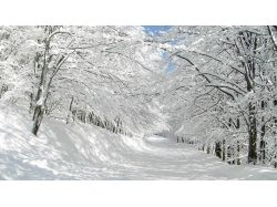 Картинки зима 1366х768