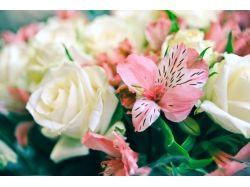 Фото цветы букеты скачать бесплатно