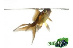 Заставка на комп рыбки