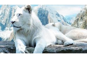 Картинки красивых животных мультипликация