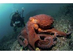 Баги игры подводный мир вконтакте