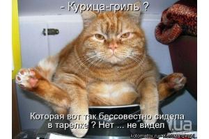 Прикольные картинки про кошек