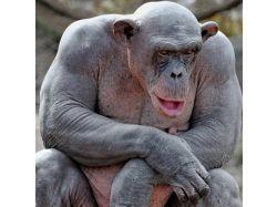 Бегемот и обезьяна прикольные картинки