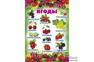 Картинки для детей садовые ягоды