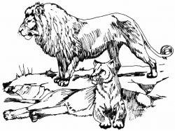 Картинки животные винкс из4 сезона