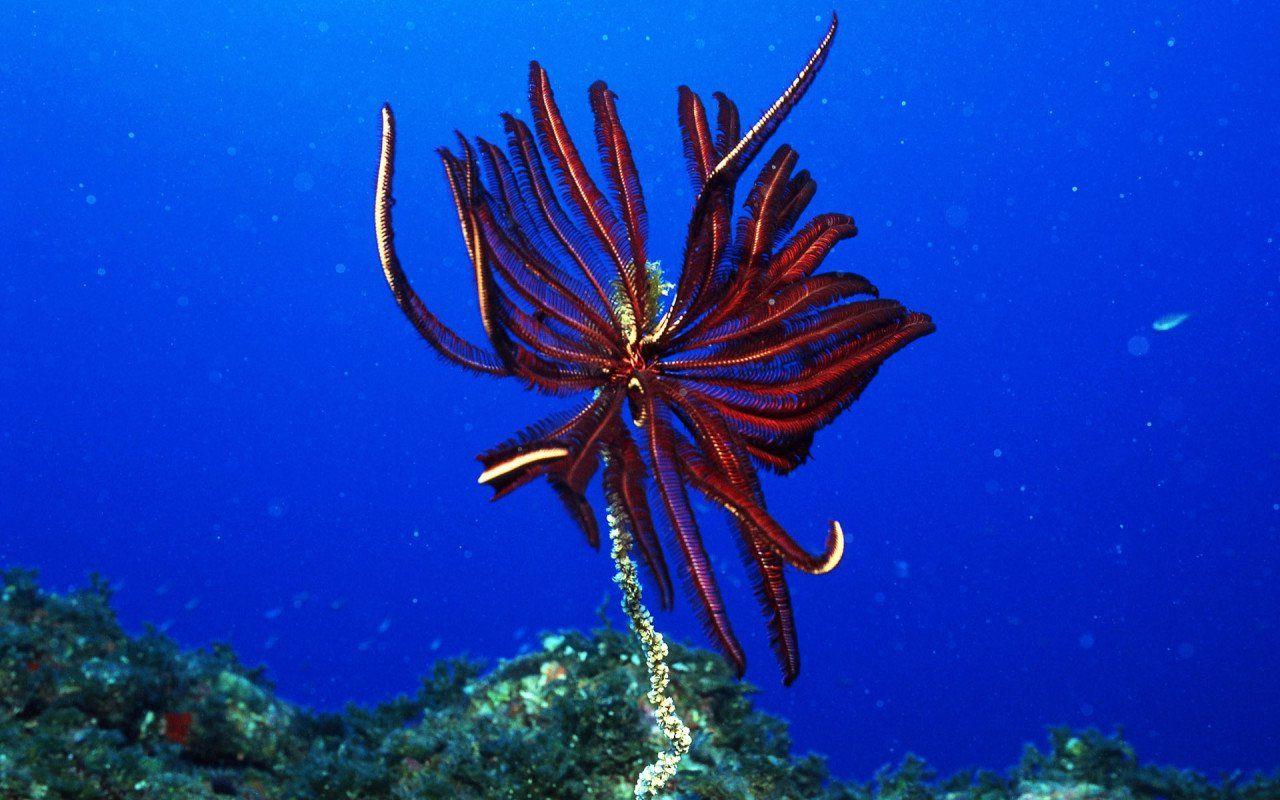 Доклад на тему удивительный подводный мир » Скачать лучшие ...