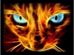Аватарки - котики с сердечком
