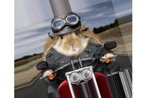 Фото зайцев прикольные