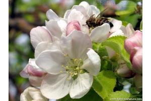 Картинки красивые весна в деревни