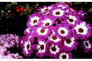 Картинки цветы разные
