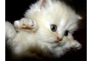 Картинки кошки красивые с анимациями