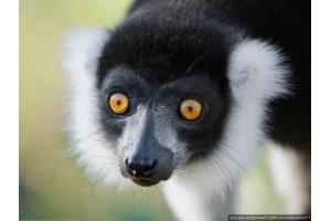 Животные мадагаскара фото