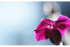 Цветы картинки для рабочего стола