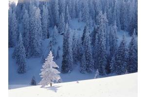 Фото зима скачать