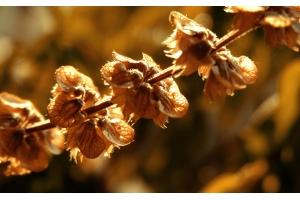 Картинки цветы осень