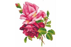 Винтажные картинки цветы