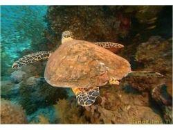 Онлайн смотреть бесплатно и без регистрации подводный мир