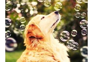 Заставка на комп мыльные пузыри