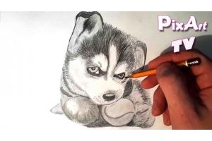 Рисунки карандашом милые животные