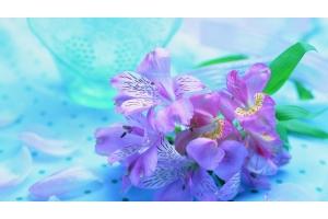 Обои на рабочий стол цветы орхидеи